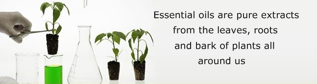 Essential oils are pure extracts from plants all around us
